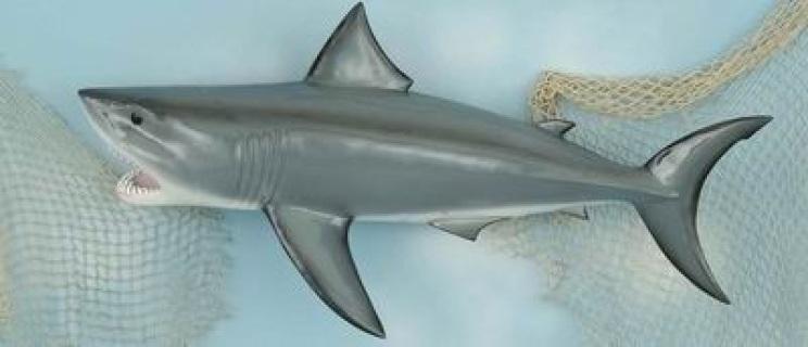 Shark Mounts Mako Shark Mounts Wholesale Great White