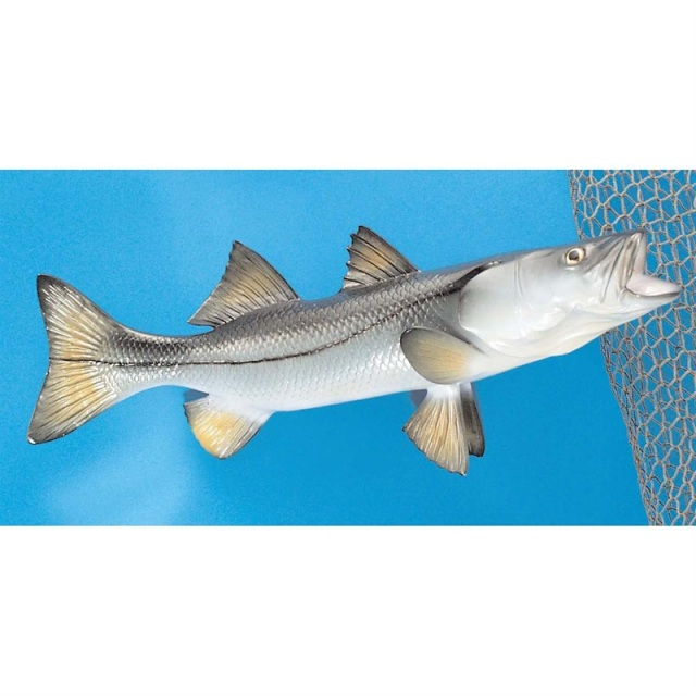 snook fish mount 20 inch real size  snook fish mounts for sale